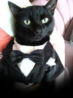 black bombay cats