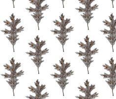 Silver Oak Leaf -Woodland collection  gollybard