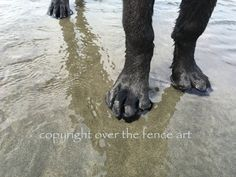 Dog Note Card Black Labrador Sandy Toes by overthefenceart on Etsy