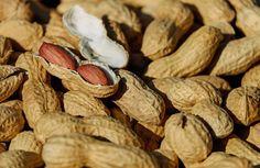 Les arachides sont désormais incluses dans l'alimentation des bébés aux Etats-Unis