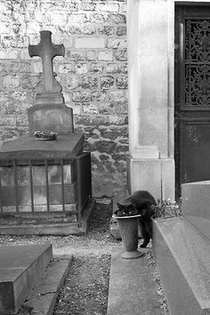 A black cat drinking from an urn in Cimetière de Montmartre (Montmartre Cemetery). Description from pinterest.com. I searched for this on bing.com/images