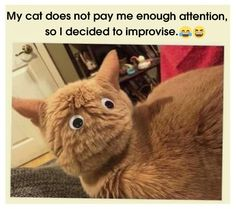 Funny cats compilation 2016 Best funny cat videos ever by Funny Vines.Hope you like a new funny cat videos compilation funny cats and silly cats . Cute Funny Animals, Funny Animal Pictures, Funny Cute, Super Funny, Funny Pics, Hilarious Photos, Animal Pics, Best Cat Memes, Funny Cat Memes