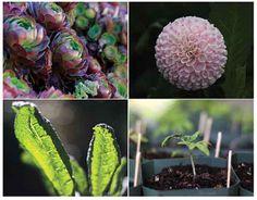 San Francisco Flower & Garden Show (CA)