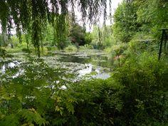 Monet's water lilies and water garden