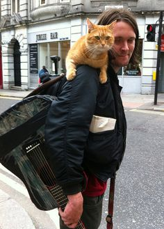 Bob Cats Ginger Cat Bob - Homeless James met a ginger cat Bob, and he changed his life. All these five years, Bob along with James gives him the power to make a living and to change his life. I Love Cats, Cute Cats, Funny Cats, Bobcat Pictures, Street Cat Bob, Amor Animal, Owning A Cat, Small Cat, Ginger Cats