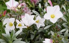 Magical white gardens are easy to achieve at home. TV Gardener David Domoney chooses his top white plants for chic, elegant flowers. Elegant Flowers, White Flowers, Garden Beds, Garden Plants, Indoor Garden, Growing Herbs Indoors, Wooden Roses, Door Picture, White Plants