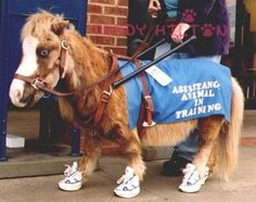Service Animals | New Law: A Service Animal Can Be Dog Or Mini-Horse