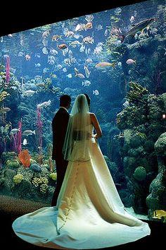 Weddings at The Florida Aquarium are beautiful