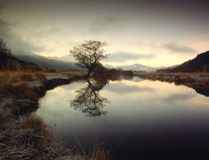 Hasselblad Masters Awards 2012  Finalists - Tree Lake by Eoghan Kavanagh