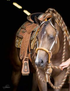 Love the tack!!! Especially the reins
