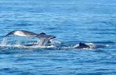 Get up close to the whales on a Cape Cod whale watching cruise. This pair was right at boatside!