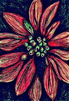 Poinsettia Drawing by Sarah Loft