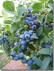 images about Fruiting Plants on Pinterest Fruit