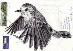 Bic Biro drawing on envelope Art Print by Mark Powell Bic Biro Drawings Mark Powell, Collages, Envelope Art, Mail Art, Art Sketchbook, Bird Art, Figure Drawing, Beautiful Birds, Art Drawings
