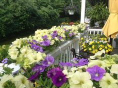 Summer Sensation - 9, 36 inch window boxes on a railing. Loaded with Petunias, Verbena, Surfinia, and Superbells.
