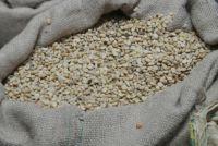 Frissen szedett, tisztított és szárított zöld kávébab How To Dry Basil, Herbs, Herb, Medicinal Plants