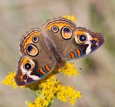 Fall Flowers for Butterflies