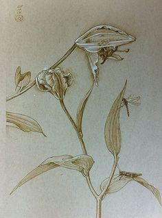Lilliums & grasshopper Quill & bistre drawing by Luis Vargas Saavedra