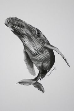 Humpback Whale Art Print $20 Pointillism Tattoo, Whale Drawing, Sea Life Art, Whale Tattoos, Rare Animals, Strange Animals, Art Carved, Ocean Creatures, Tatoo