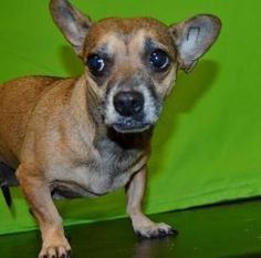 Chi-Chi has been adopted!