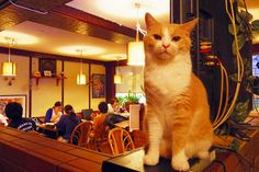 In Japan, since so many people who love cute animals live in apartments that don't allow pets, you can find cafes that'll let you relax in the company of everything from owls to bunnies. The most common and widely documented are of course cat cafes, but what do you do when you're craving not only a little feline co ...