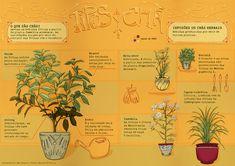 Infográfico #11 – Tipos de chá   Mexido de Ideias