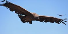 Interested in learning about different types of large birds? Read on for profiles and information on some of the most well-known large bird in the world. #Largebirds