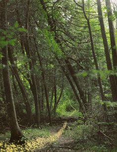 Fairy Trails by Lissy Elle Laricchia, via Flickr