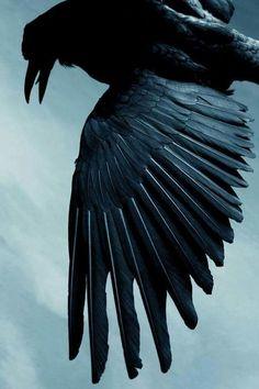 corvid crow raven la corneille il corvo 烏 el cuervo ворона 乌鸦 Quoth The Raven, Yennefer Of Vengerberg, Raven Art, Raven Totem, Jackdaw, Crows Ravens, Ravenclaw, Beautiful Birds, Beautiful Creatures