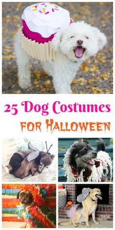 25 Dog Costumes for Halloween Looking for cute Halloween dog costumes? Check out these 25 dog costumes for Halloween here!c The post 25 Dog Costumes for Halloween appeared first on Halloween Costumes. Cute Dog Costumes, Pet Halloween Costumes, Animal Costumes, Dog And Owner Costumes, Halloween Puppy, Family Halloween, Halloween Halloween, Game Mode, Dog Crafts