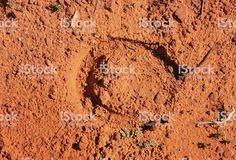 empreintes cheval désert - Recherche Google Recherche Google, Abstract, Artwork, Horse, Summary, Work Of Art