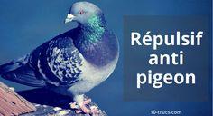 Répulsif pigeons, un problème de pigeon à votre campement? Voici pleins de répulsif anti pigeon à tester au camping cette année!