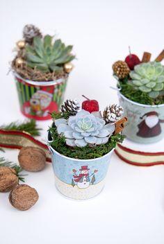 #flower #christmas #pottery #pottedfavors #smallplant #gift, #succulents #pot #plante #pottedplants #christmaspot #christmasdecoration #christmasplants #Christmasplantgift #planteCraciun #aranjamentCraciun #plantecadou #metalpot #christmaspot