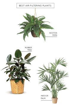 the best air filtering plants for your home | sugar & cloth