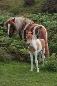 Pony and foal, Dartmoor by Miles Wolstenholme on Fivehundredpx via Sallie Denmark All The Pretty Horses, Beautiful Horses, Animals Beautiful, Animals And Pets, Baby Animals, Cute Animals, Baby Horses, Wild Horses, Majestic Horse