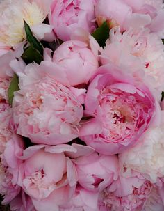 Bouquet Peonies by Carolyn Chase on YouPic Flowers Nature, Fresh Flowers, Beautiful Flowers, Red Tulips, Pink Peonies, Peony Illustration, Bloom Baby, Flower Aesthetic, Peony Flower