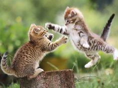 【動物画像】明日祝日やし動物画像:ハムスター速報