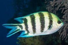 Home - Fish Underwater Tropical Aquarium, Aquarium Fish, Underwater Fish, Beautiful Fish, Pets, Animals, Animaux, Animal, Animales