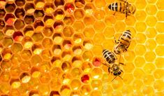 Find Closeup Bees On Honeycomb Apiary Selective stock images in HD and millions of other royalty-free stock photos, illustrations and vectors in the Shutterstock collection. Beekeeping Course, Honey Uses, Bee Removal, Bites And Stings, Bee Photo, Crop Production, Bee Friendly, Bee Sting, Insects