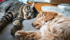 Of course, you should always make sure your cat is calm and comfortable before introducing a new animal pal, including puppies and dogs. Here are some tips if you plan on bringing home a doggo for your cat!