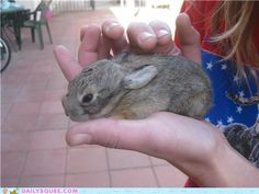 cute animals - Baby Bunny