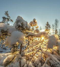 January Light par Rose-marie Karlsen on 500px