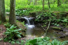 Shady Stroll Trail in Vaughan Woods State Park with waterfalls and green trees