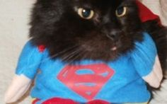 Cats In Funny Costumes