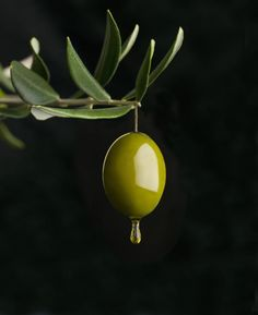 Which type of olive oil is right for your soap making recipes? What's the difference in the different grades of olive oil? Soap Making Recipes, Soap Recipes, Types Of Olives, How To Make Oil, Eat Pray Love, Still Life Photos, Oil Bottle, Homemade Beauty Products, Cooking Oil