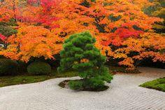 Un paseo por algunos jardines japoneses en otoño | Espacios vivos http://espaciosvivos.es/paseo-jardines-japoneses-en-otono/