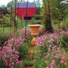 10 Easy Plants to Grow