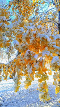 Image result for fall with snow on the ground