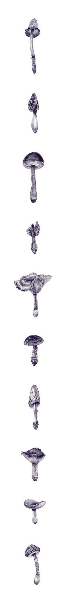 Drawings by Eibatova Karina.