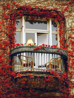 Ivy Balcony, Paris, France photo via sophy - Blue Pueblo. This is the most romantic balcony I've ever scene. Only in Paris, baby! Belle Villa, France Photos, Fun Cup, Window Boxes, My Dream Home, Belle Photo, Windows And Doors, The Good Place, Perfect Place